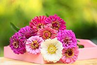 ガーベラの花の風水的飾り方、恋愛運・結婚運の底上げに最適!